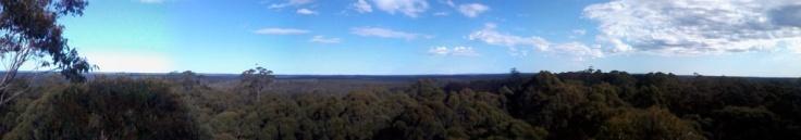 Der Wald, aus 53 Metern Höhe