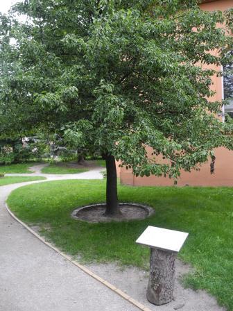 Hier stand der Birnbaum.