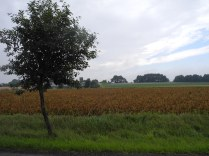 In der Lüneburger Heide.