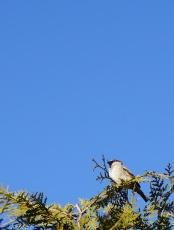 Vogel (1. Versuch)