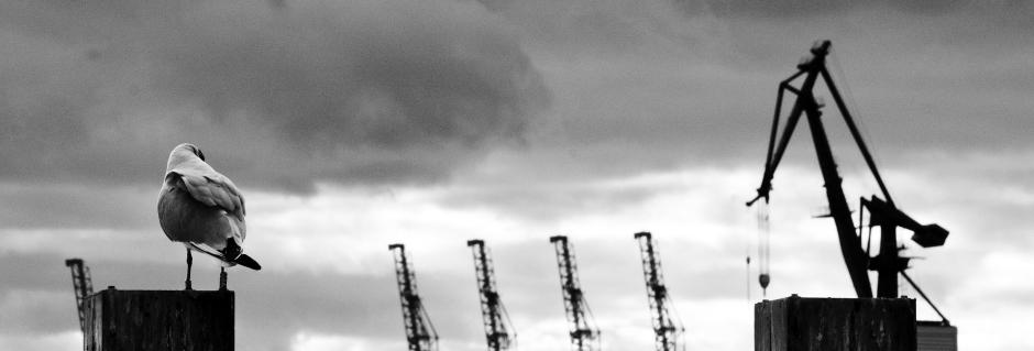 Schwarz-Weiss-Bild von Möwe und Kran im Hamburger Hafen