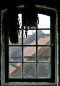 Ähren vor dem Fenster