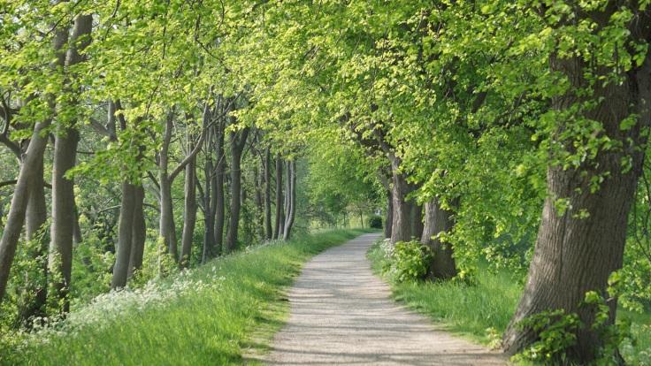 Der von vielen grün belaubten Bäumen gesäumte Fußweg zur Bunthäuser Spitze.