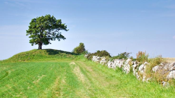 Ein Baum auf einem Hügel, auf den eine Steinmauer hinzu läuft. Strahlender Sonnenschein, knallblauer Himmel.